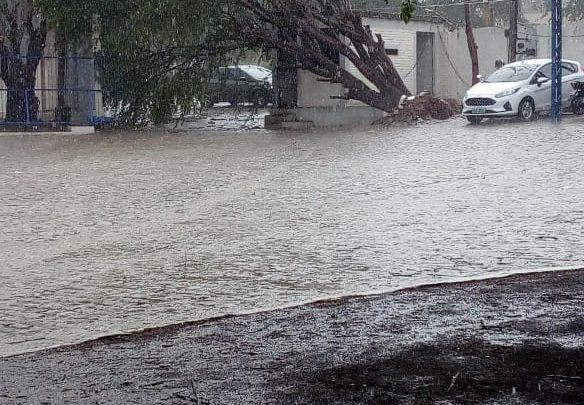 Chuva e vento forte derrubam árvores em Caruaru