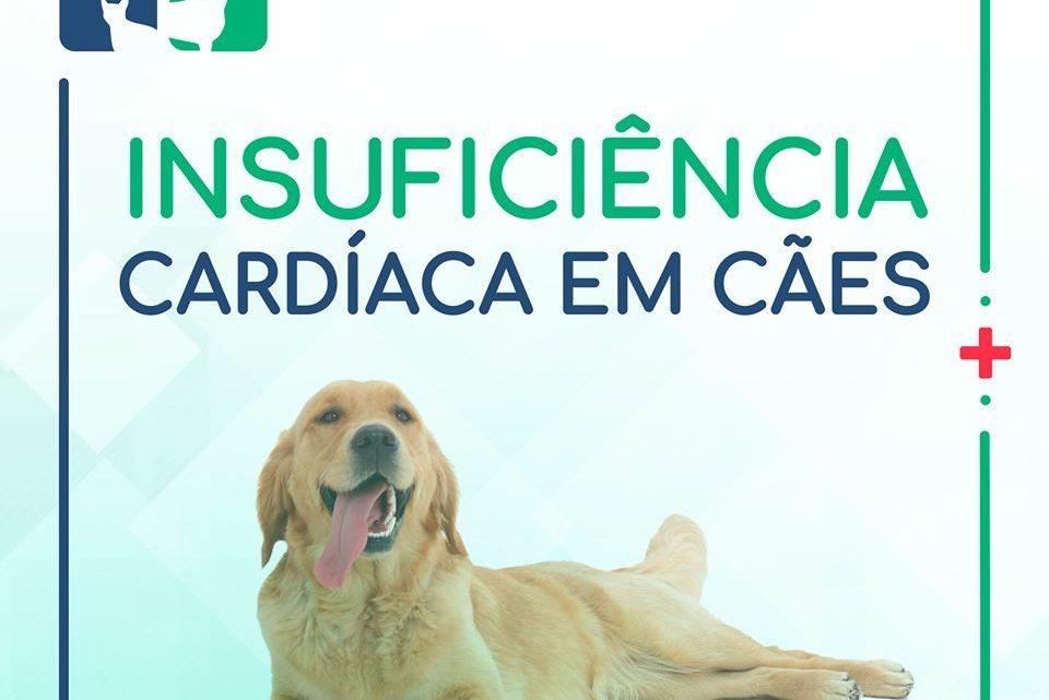CVJR: Cães tem insuficiência cardíaca