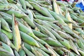 Ceaca comercializa milho a partir desta quarta (5)