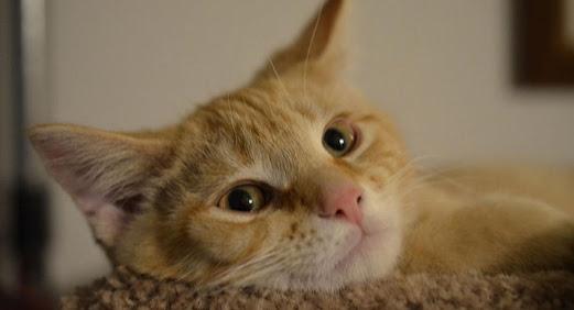Prefeitura de Caruaru vai realizar mutirão de castração de gatos
