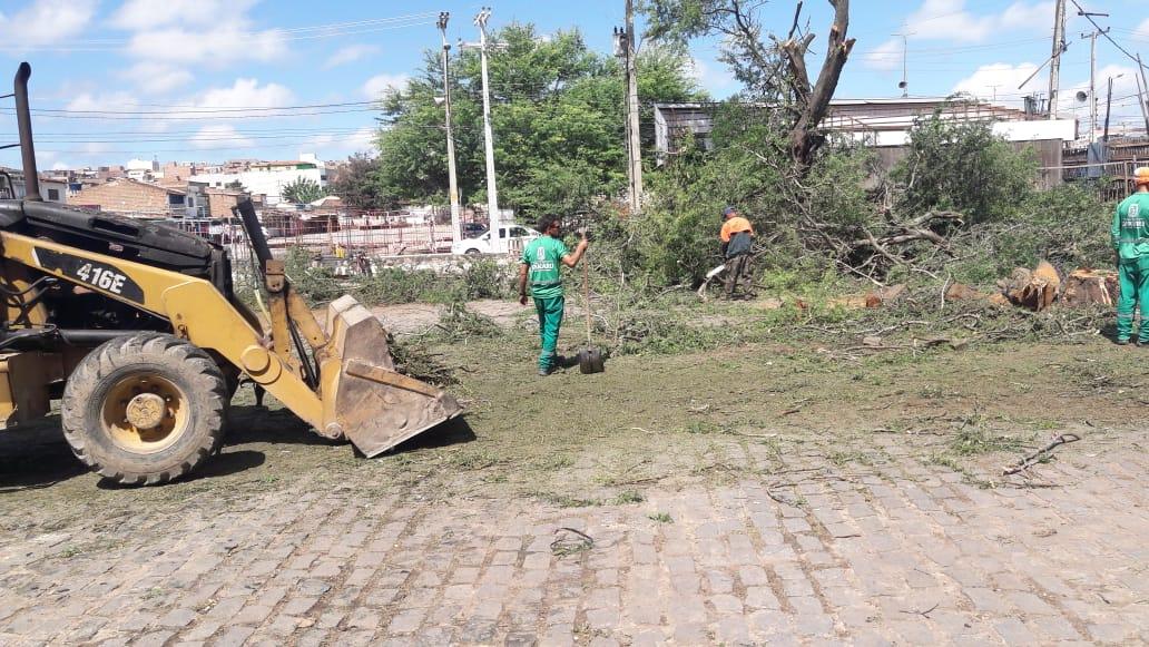Árvores que ameaçavam cair são erradicadas no Parque 18 de Maio