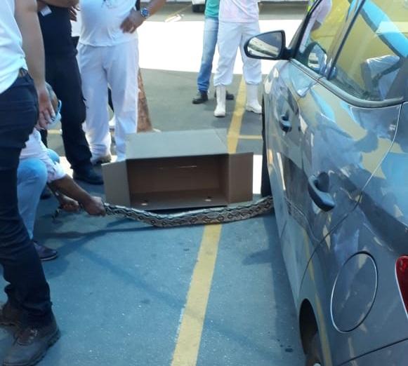 Cobra é capturada em estacionamento de supermercado em Caruaru – Blog do  Edvaldo Magalhães