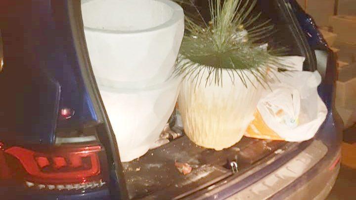 Homem que estava em carro de luxo avaliado em R$ 300 mil é detido por suspeita de furtar loja de plantas