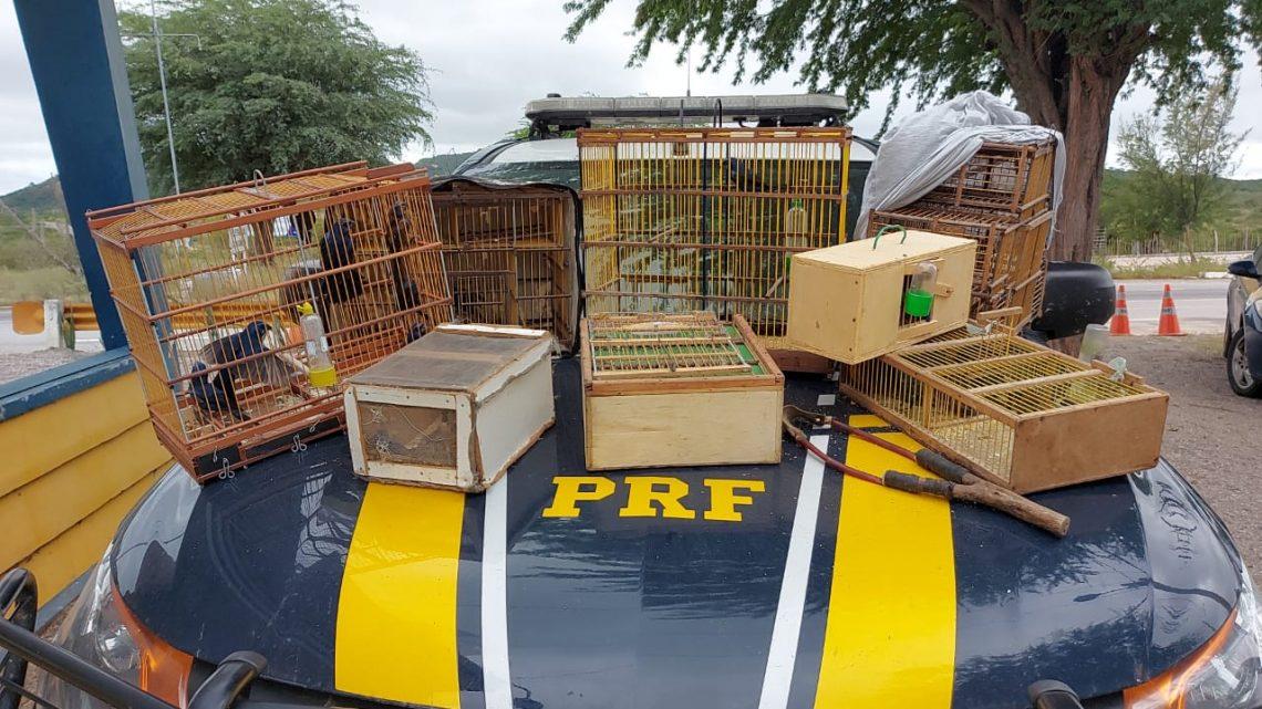 PRF apreende pássaros silvestres na BR 232 que saíram do Sertão e seriam comercializados no Agreste-PE