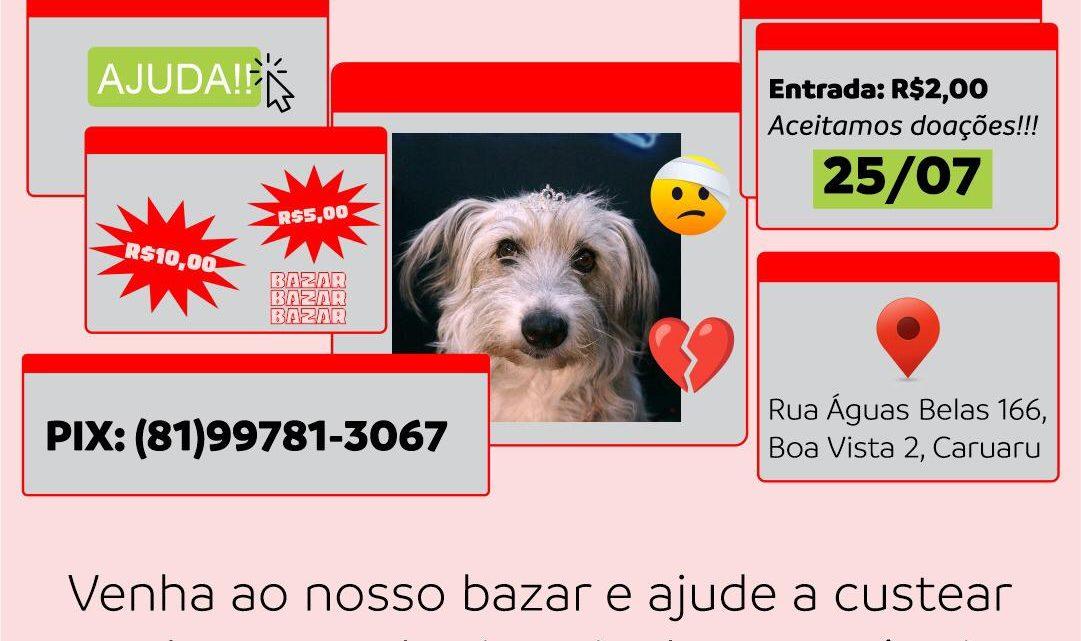 Bazar solidário busca arrecadar doações para tratamento de cachorrinha em Caruaru