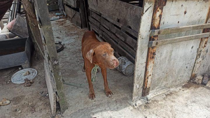Animais vítimas de maus tratos foram apreendidos em Caruaru